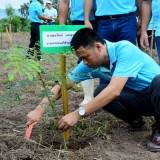 โครงการปลูกต้นไม้ 12 สิงหามหาราชินี